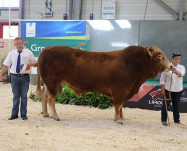 Concours national Limousin -