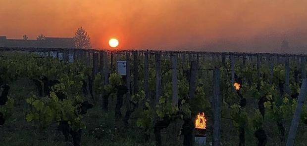 Bordeaux - 5 à 10 % du vignoble touché par le gel