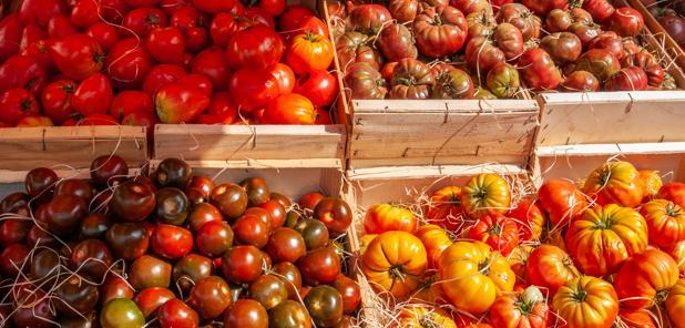 Conjoncture - La production de tomates recule